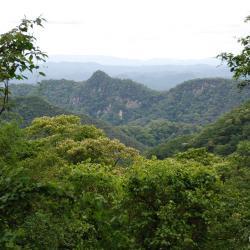 Der Regenwald in Brasilien. / DAHW