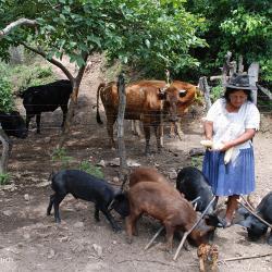 Viele Menschen teilen Ihren Lebensraum mit den Tieren / DAHW
