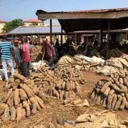 Yam (Yamswurzel) auf dem Markt / DAHW